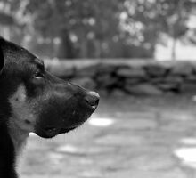 B&W: The Philosophical Dog by Tettvy