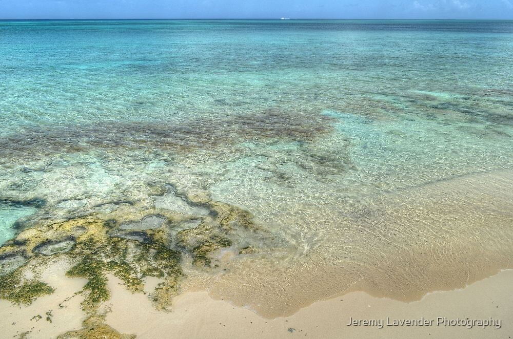 Sea Moss in Western Nassau, The Bahamas by Jeremy Lavender Photography
