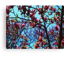 Magnolia Crescendo Canvas Print