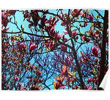 Magnolia Crescendo Poster