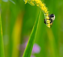 Bumble bee love by olivera kenic