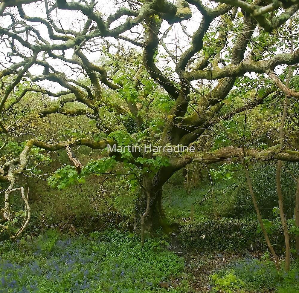 Valency oak by Martin Harradine