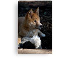 Dingo Pup At Play Canvas Print