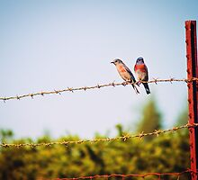 Birds on a Wire by Christopher Burton