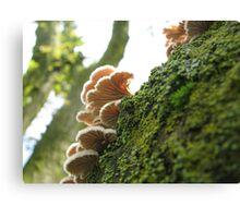 Delicate Nature Canvas Print