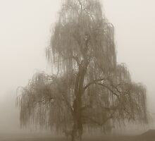 Moody Willow  by phillip wise