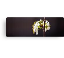 Spring Glimpses Canvas Print