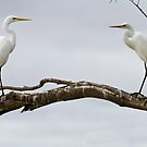 Two Egrets by Hedoff