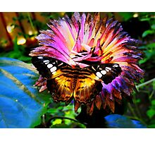In Paradise garden Photographic Print