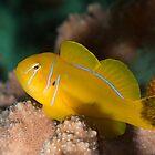 Golden fish by Natalia Pryanishnikova