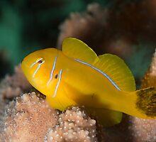 Marine Life by Natalia Pryanishnikova