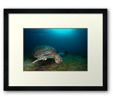 In the sea grass Framed Print