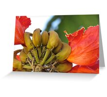 Banana's growing in Belize Greeting Card