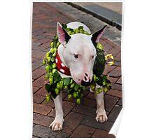 English Bull Terrier Poster