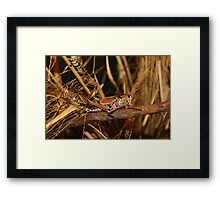 Buggy Framed Print
