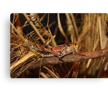 Buggy Canvas Print