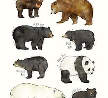 Bears by Amy Hamilton