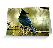 STELLAR BLUE JAY Greeting Card