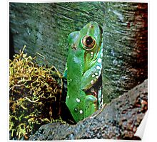 Frog Story ~ Part Four Poster