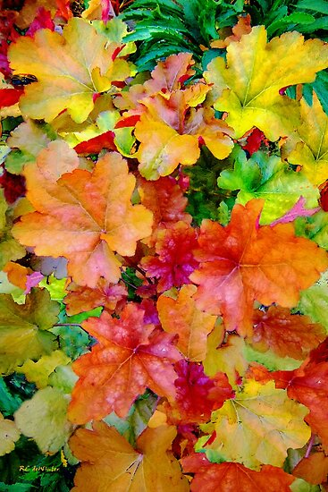 Foliage Festival by RC deWinter