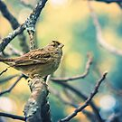 Little Bird by Christopher Burton