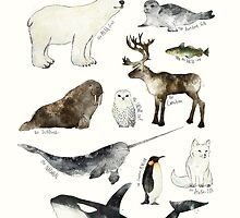 Arctic & Antarctic Animals by Amy Hamilton