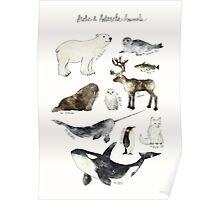 Arctic & Antarctic Animals Poster