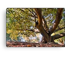 Under a fig tree - HDR shot Canvas Print