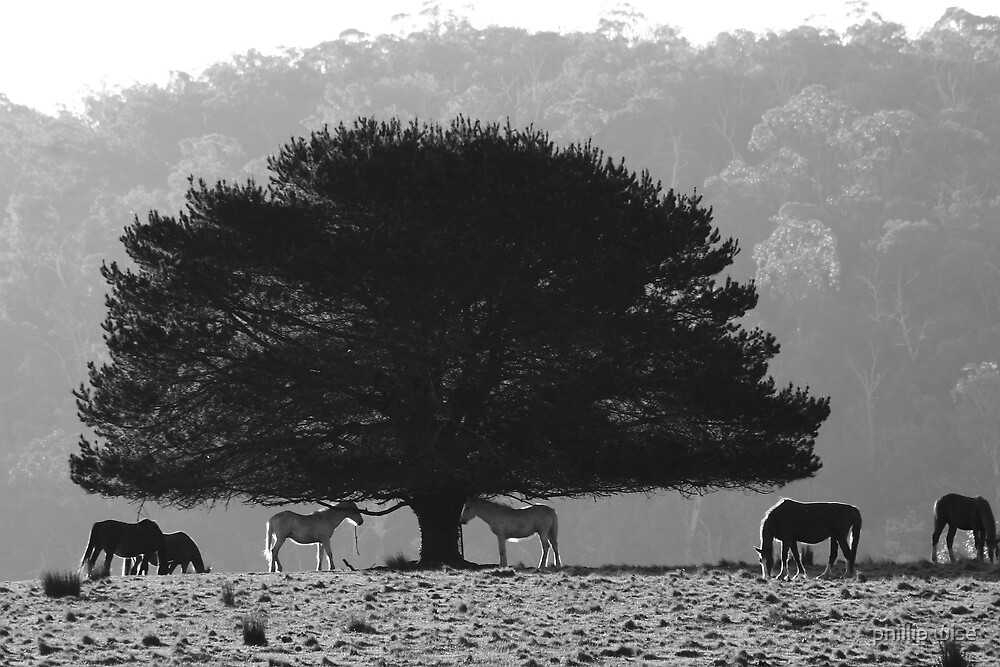 """ Strathbogie Horses"" by phillip wise"
