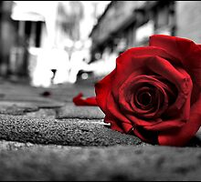 Rose - red on black & white by mashdown