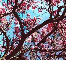 Pink MagnoliaTree by MSRowe Art and Design