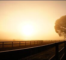 Trotting yard in the fog by mashdown