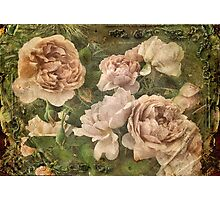 Gather roses while you may ... Photographic Print