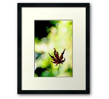 Leaf in a Web 2 Framed Print
