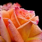 A glowing rose on a rainy morning by Celeste Mookherjee