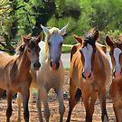 Wild Horses by Jim  Egner