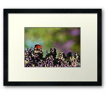 Walking Ladybird.. Framed Print