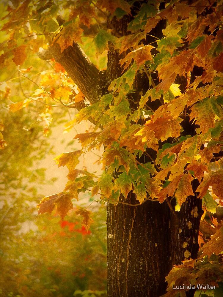 Fall Light by Lucinda Walter