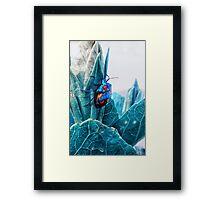 Cotton Harlequin Bug Framed Print
