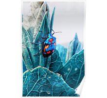 Cotton Harlequin Bug Poster