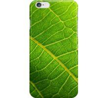 Walnut leaf iPhone Case/Skin