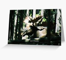 Moose - RMNP Greeting Card