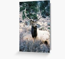 RMNP - Elk Greeting Card