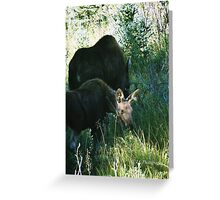 RMNP - Moose Greeting Card