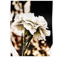 white carnation Poster