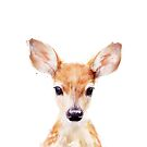 Little Deer by Amy Hamilton