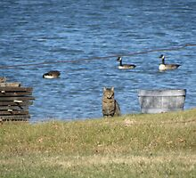 Cat and Geese by Ingasi