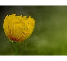 """Birth of a Golden Poppy............."" Photographic Print"
