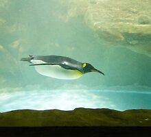 Swimming penguin at the Jurong Bird Park in Singapore by ashishagarwal74