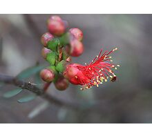 From Bud to Blossom Photographic Print